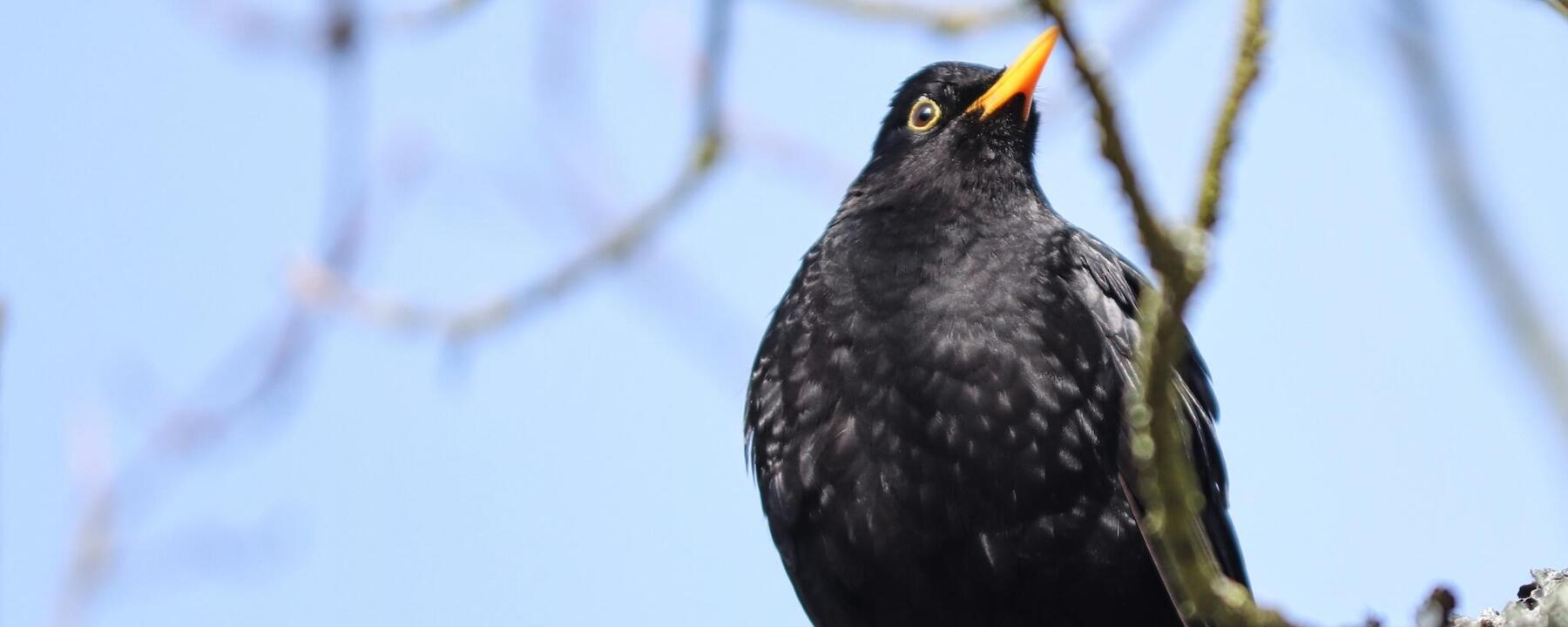 Blackbird event header